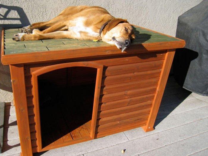 Будка для собаки (4)