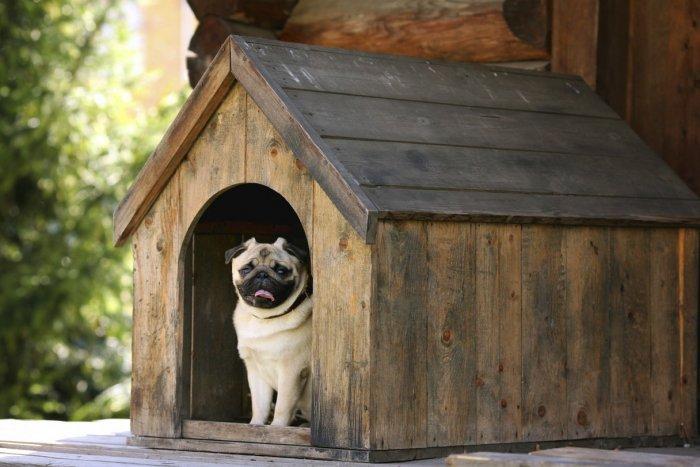 Будка для собаки (70)