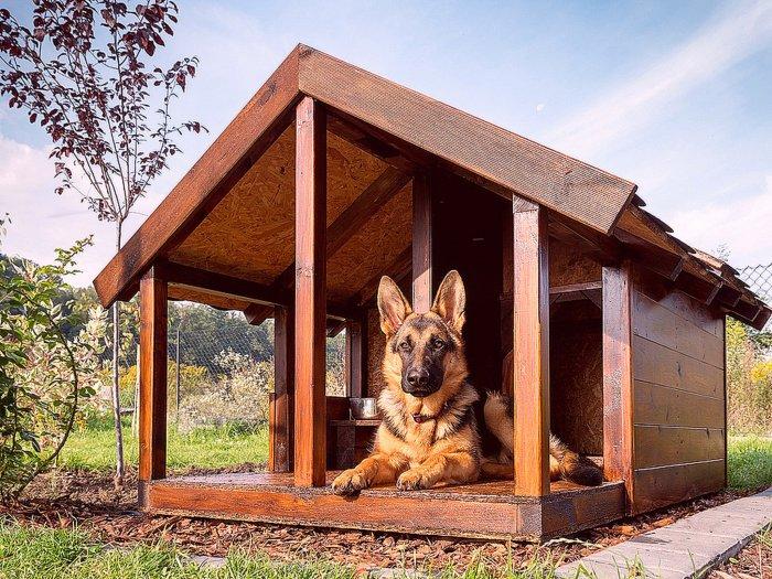 Будка для собаки (73)