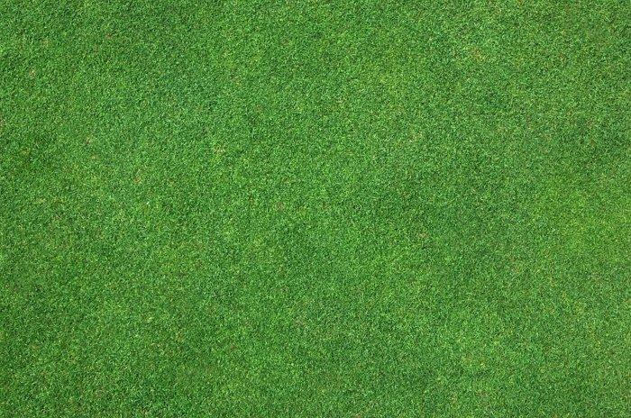 Газонная трава (18)