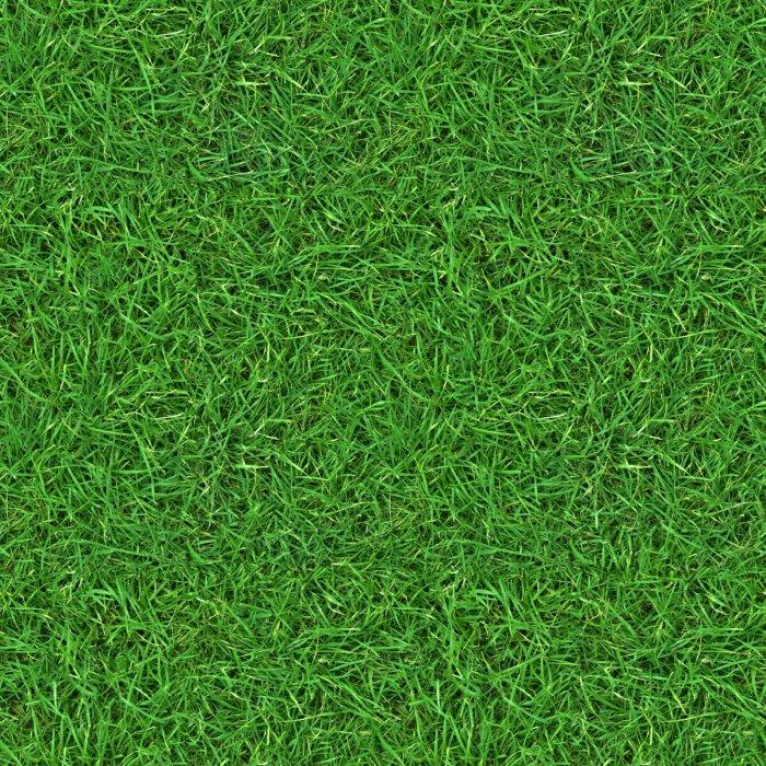 Газонная трава (2)