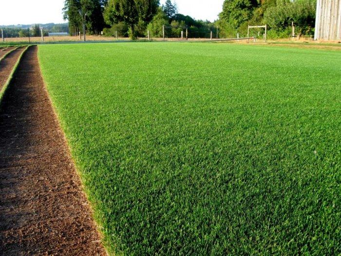 Газонная трава (20)