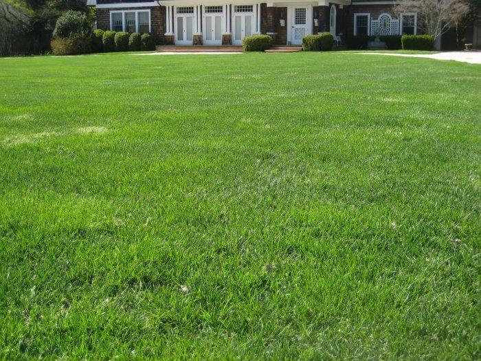 Газонная трава (28)