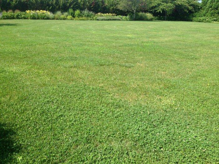 Газонная трава (29)