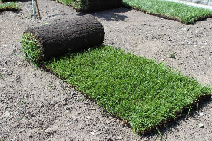 Газонная трава (30)