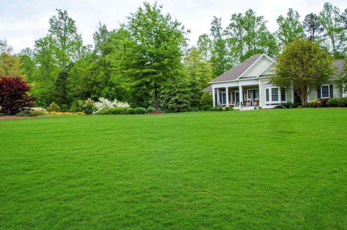 Газонная трава (35)