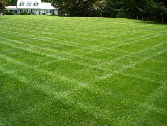 Газонная трава (36)