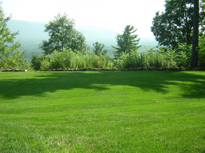 Газонная трава (37)
