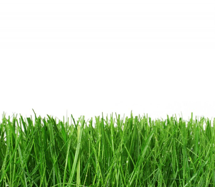 Газонная трава (38)