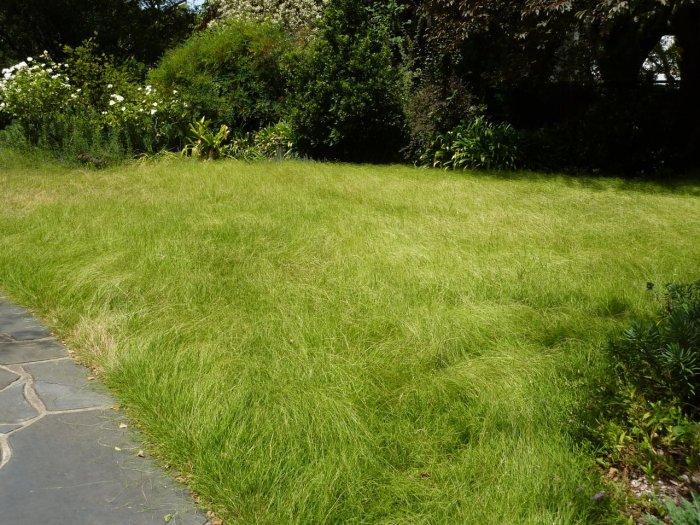 Газонная трава (4)