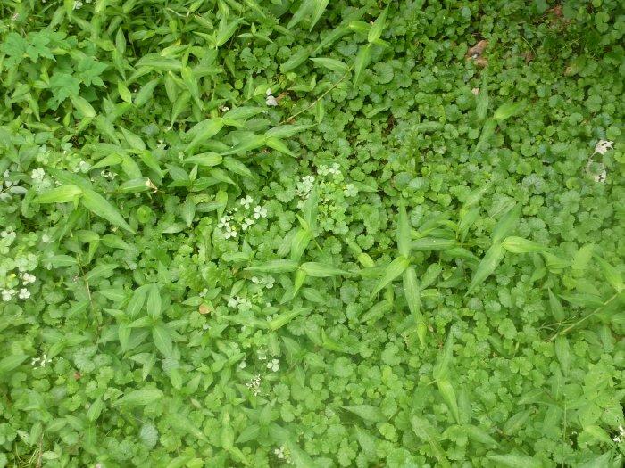 Газонная трава (40)