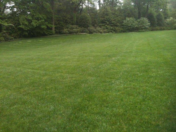 Газонная трава (41)