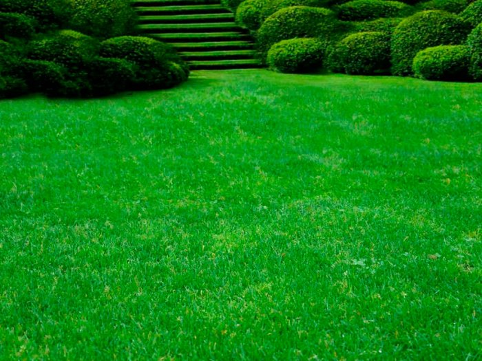 Газонная трава (42)