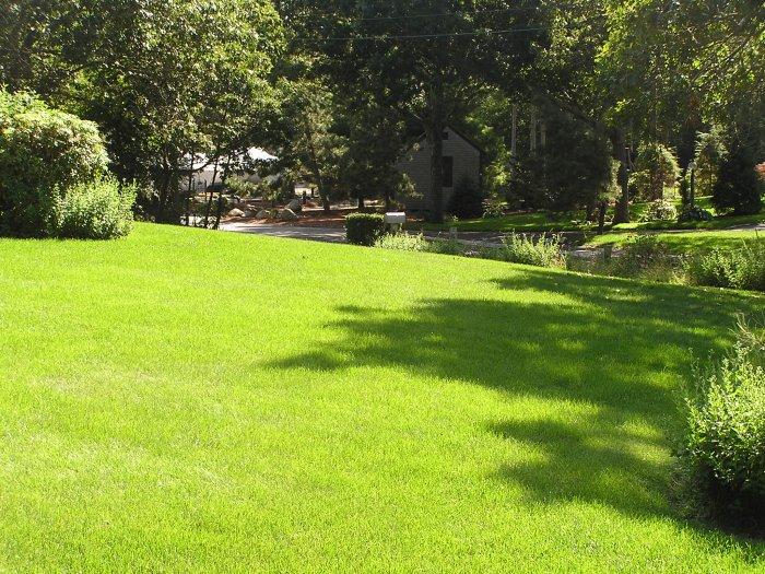 Газонная трава (44)