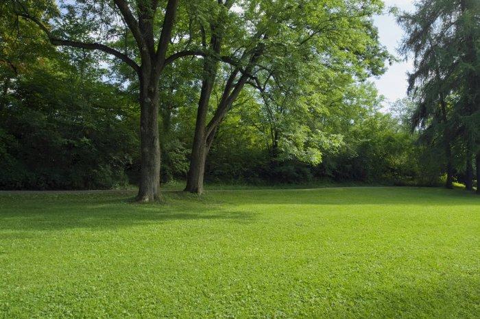 Газонная трава (46)