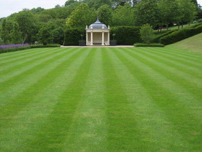 Газонная трава (50)