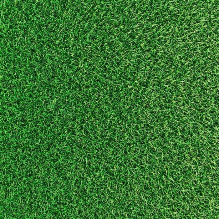 Газонная трава (51)