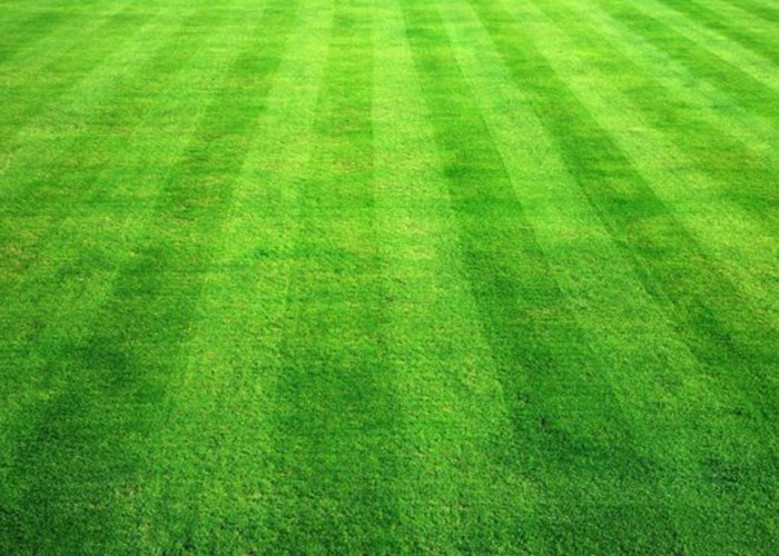 Газонная трава (55)