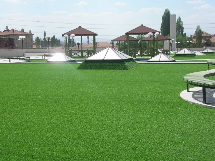 Газонная трава (7)