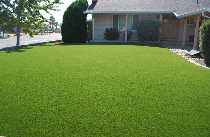 Газонная трава (9)