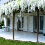 Декоративные кустарники для дачи (1)