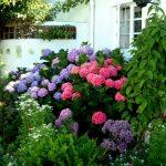 Декоративные кустарники для дачи (11)