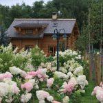 Декоративные кустарники для дачи (13)