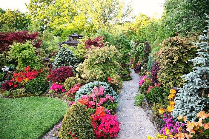 Декоративные кустарники для дачи (36)