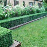 Декоративные кустарники для дачи (5)