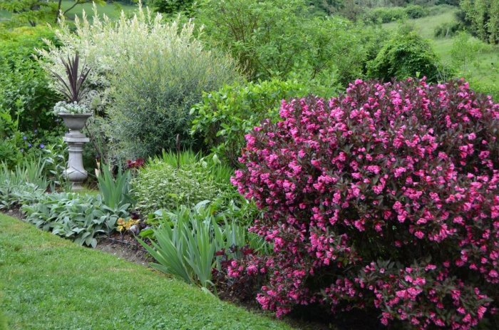 Декоративные кустарники для дачи (7)