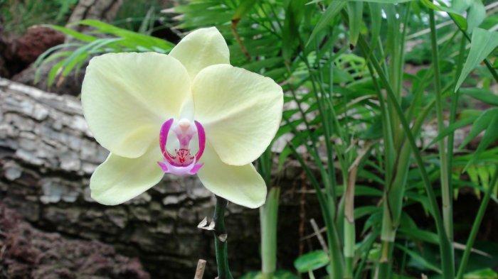 Орхидея (22)