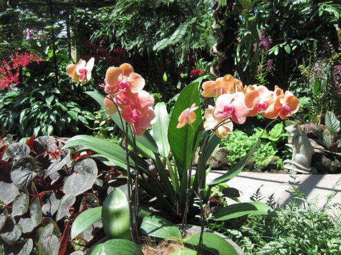 Орхидея (40)