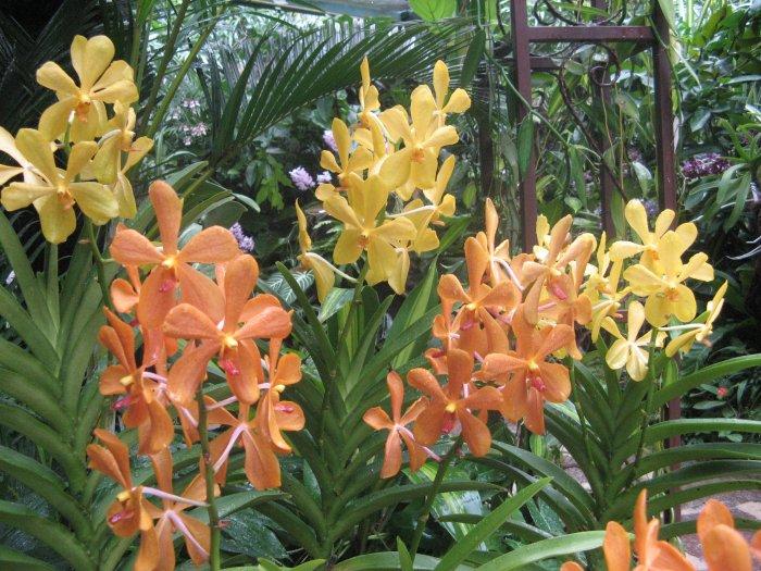 Орхидея (41)