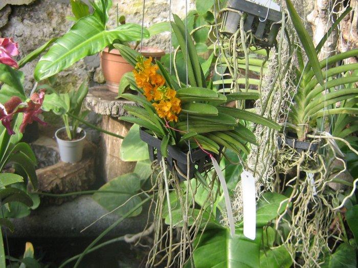 Орхидея (43)