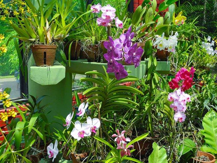 Орхидея (65)