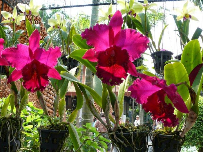 Орхидея (70)