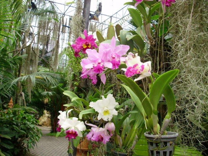 Орхидея (72)