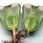 Суккулент - растение (1)