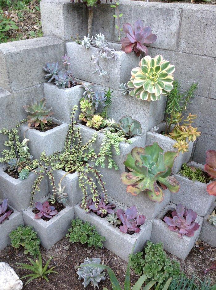 Суккулент - растение (10)