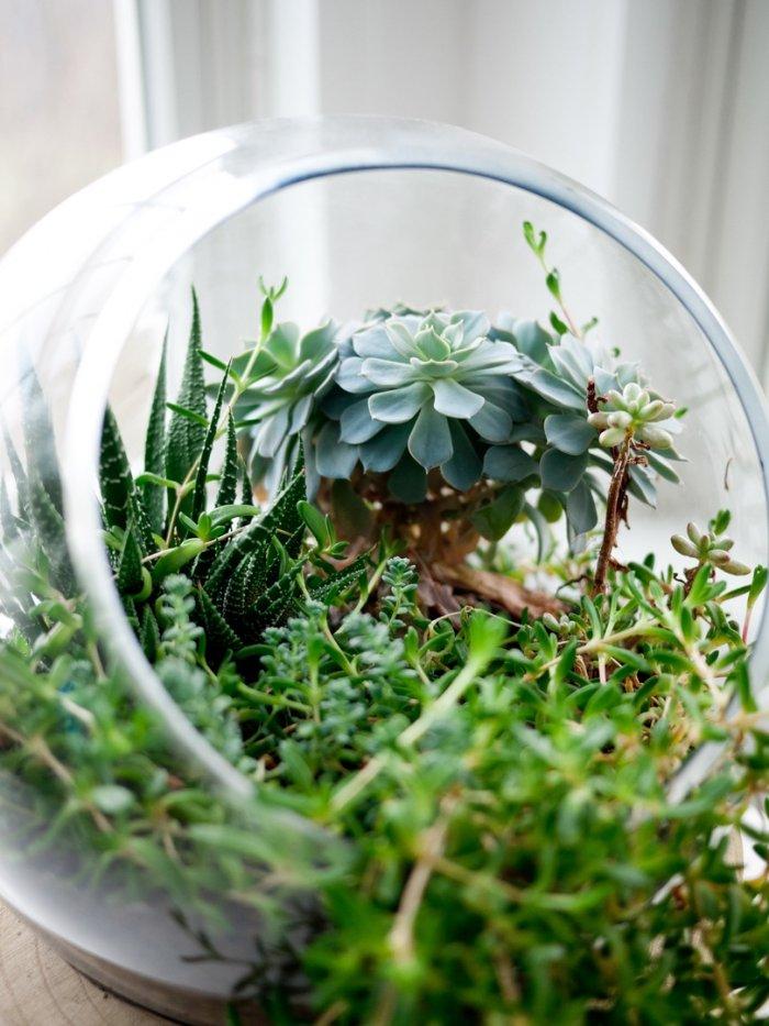 Суккулент - растение (17)