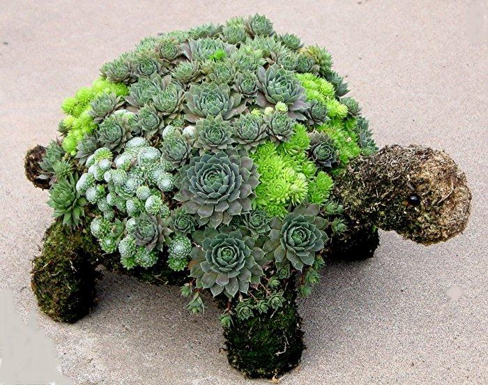 Суккулент - растение (24)