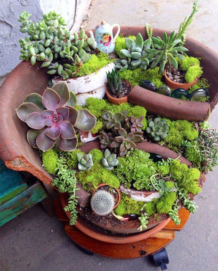 Суккулент - растение (32)