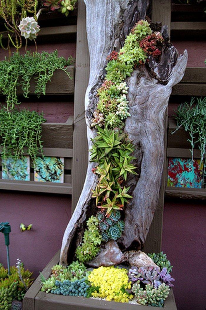 Суккулент - растение (36)