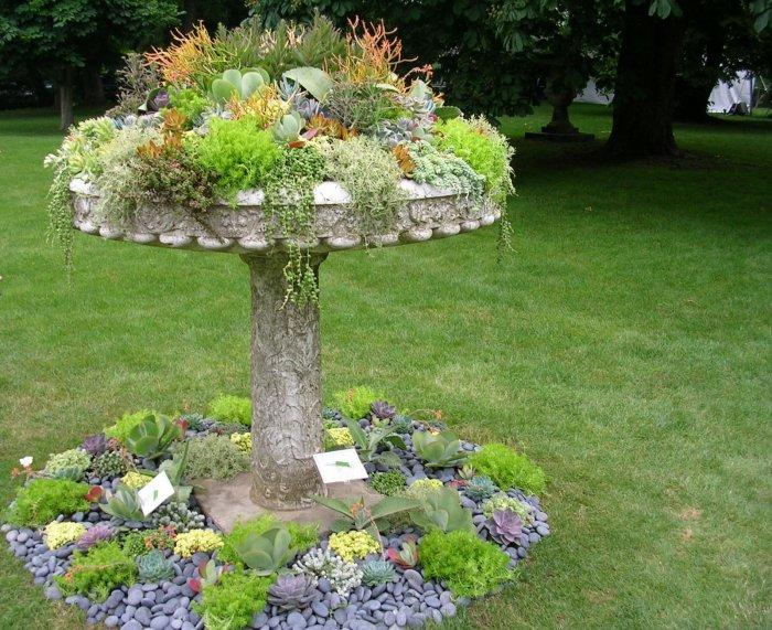 Суккулент - растение (40)