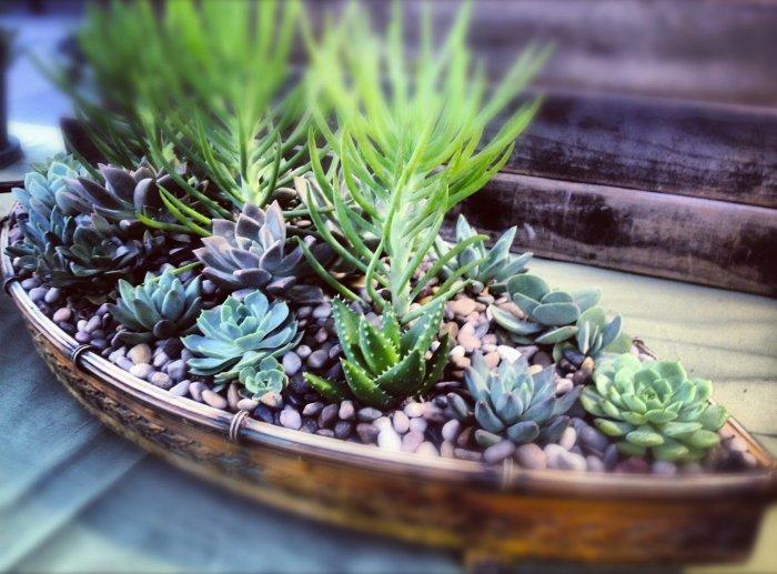 Суккулент - растение (59)