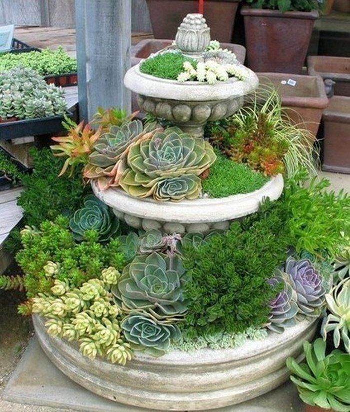 Суккулент - растение (67)