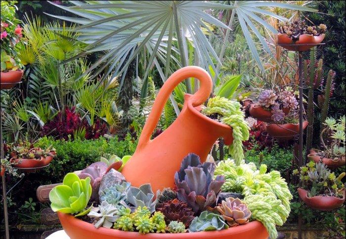 Суккулент - растение (70)