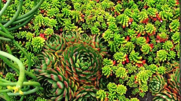 Суккулент - растение (74)