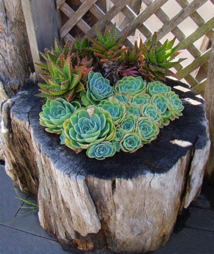Суккулент - растение (77)