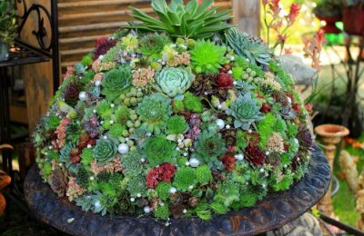 Суккулент - растение (86)